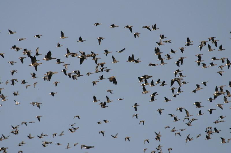 Flock,_delta!.jpg