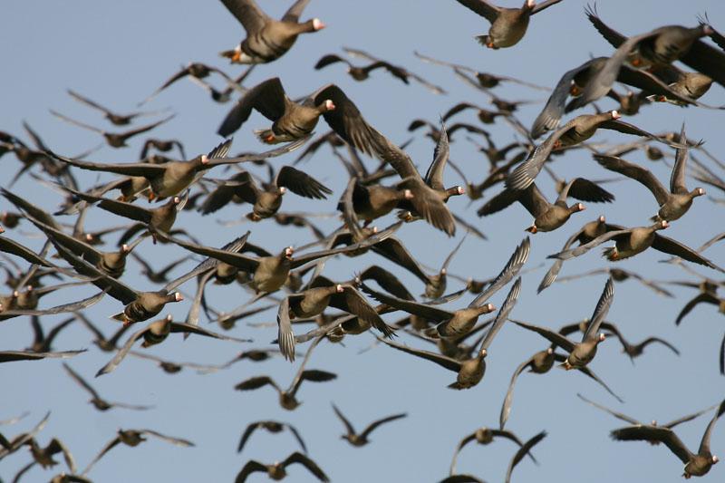 flying,delta.jpg