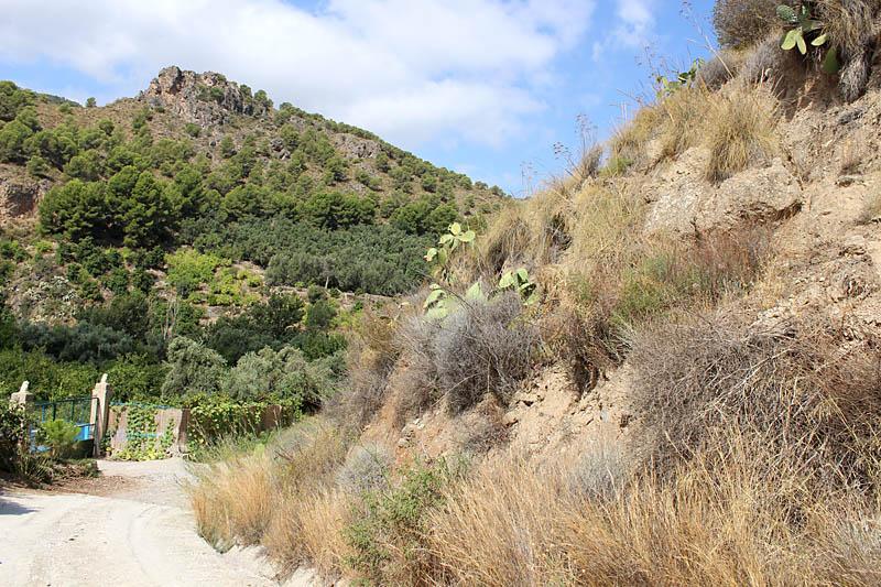 Desert_Orange_Tip_habitat_sp_1.jpg