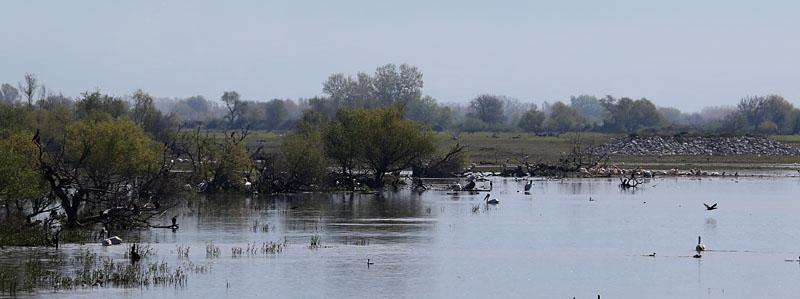 Lake_Kerkini_gr_2.jpg