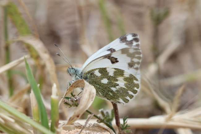 Eastern Bath White