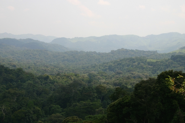Bwindi, the forests